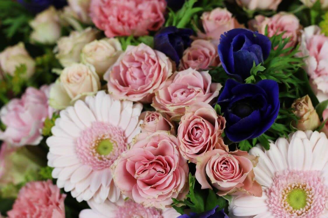 Snittblommor i rosa och blått: rosor, germini och anemon.