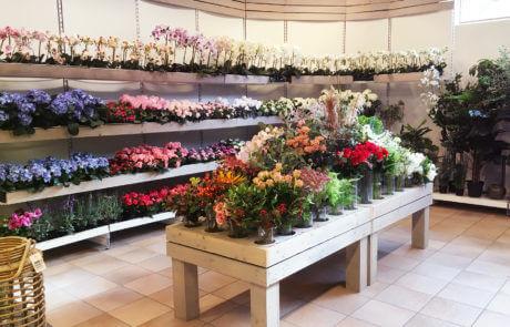 Vi har ett utvalt sortiment av sidenblommor och sidenväxter av bra kvalitet och i fint utförande.