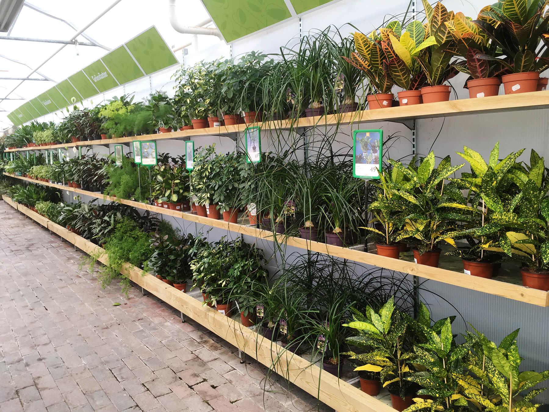 På Sollidens handelsträdgård hittar du alltid ett stort och fint sortiment av gröna växter. Här ser du en del av dem. Grönt är skönt!