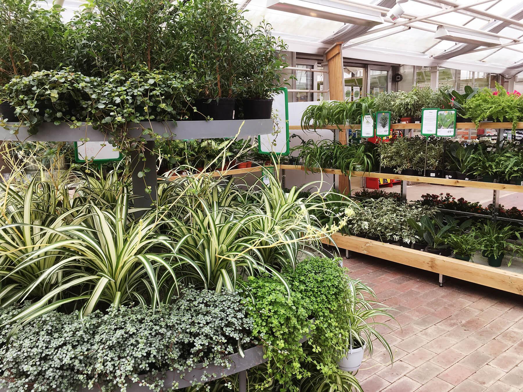 Frodiga gröna krukväxter på Sollidens handelsträdgård i Hunnebostrand.