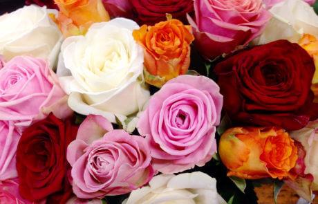 Rosor i blandade färger. Rosa, vita, orange och röda rosor.