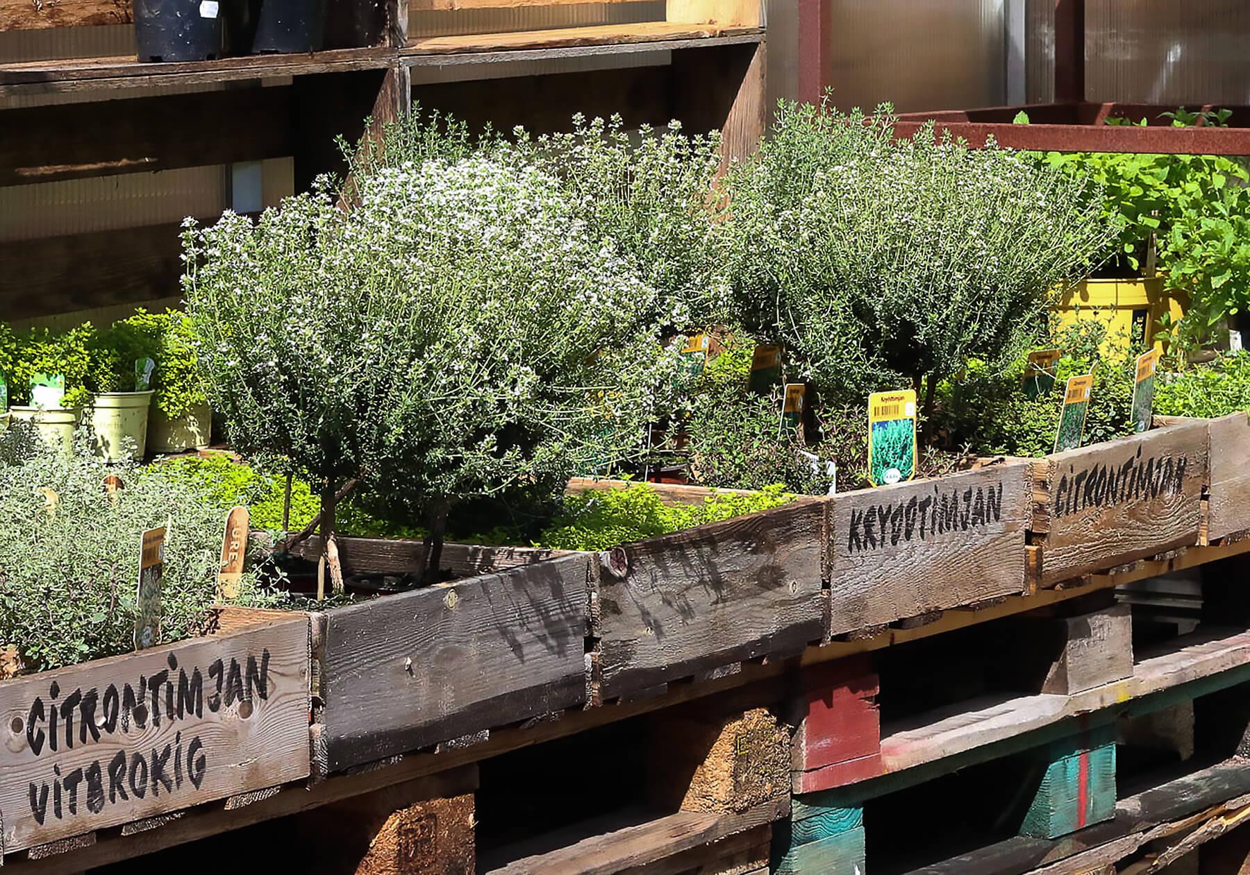 Trälådor med kryddväxter.