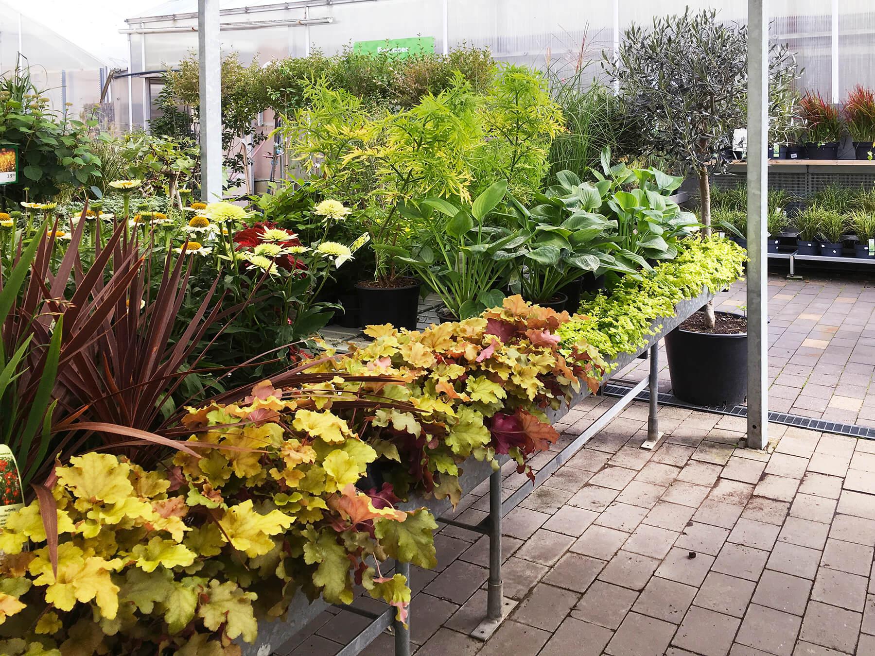 Alunrot i kopparfärg, rudbeckia, bloddracena, funkia mm. Här är en oas för dig som älskar att hålla på med trädgård.