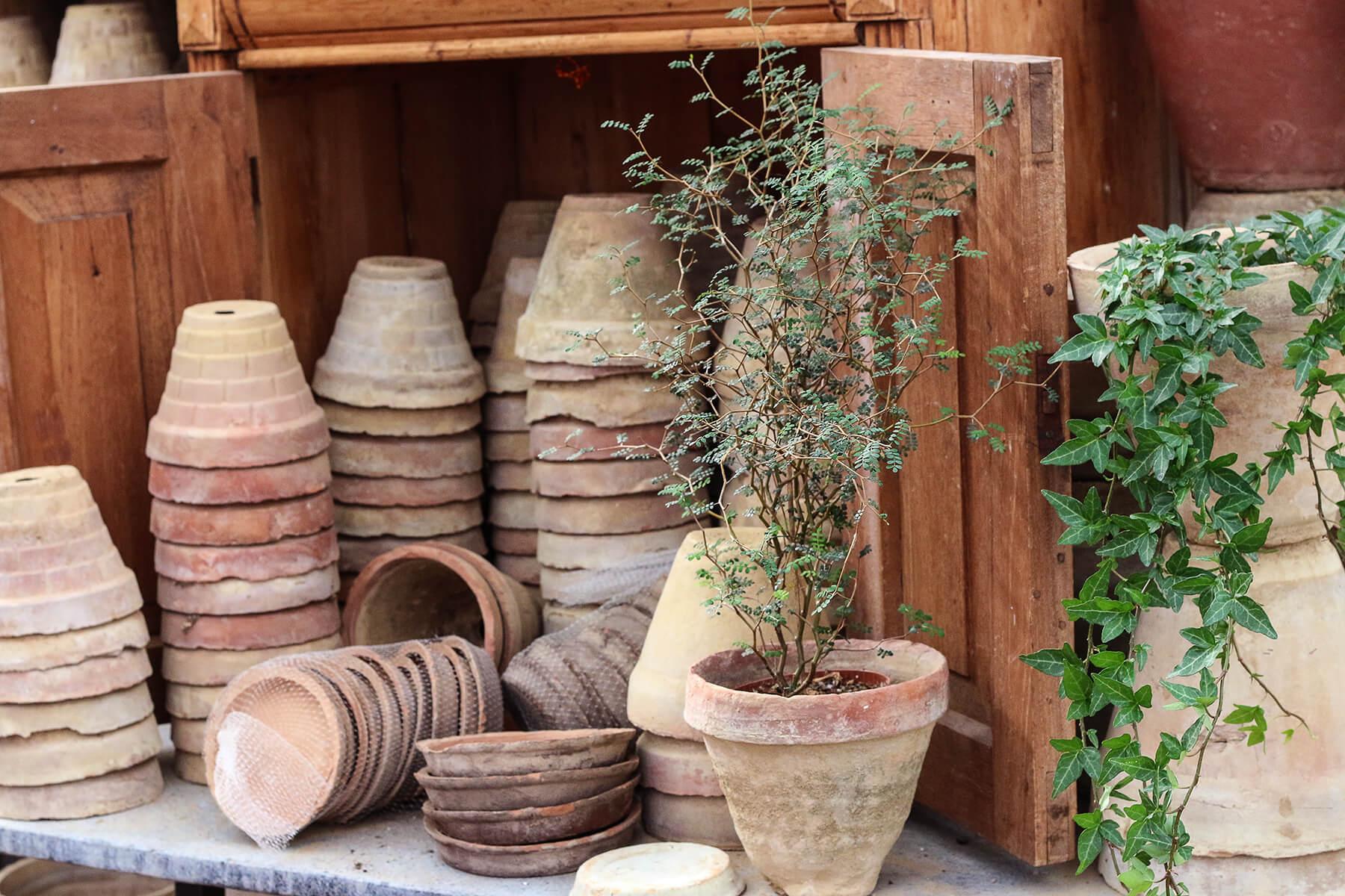 Charmigt skeva och ojämna lerkrukor passar bra till de gröna krukväxterna. Murgrönans bladslingor hänger över kanten och sophorans skira kvistar har små tunna blad.