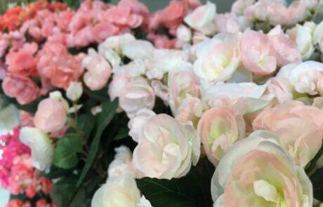 Ibland passar det bäst med sidenblommor. Här ser vi vackra begonior i olika rosa och aprikos nyanser.