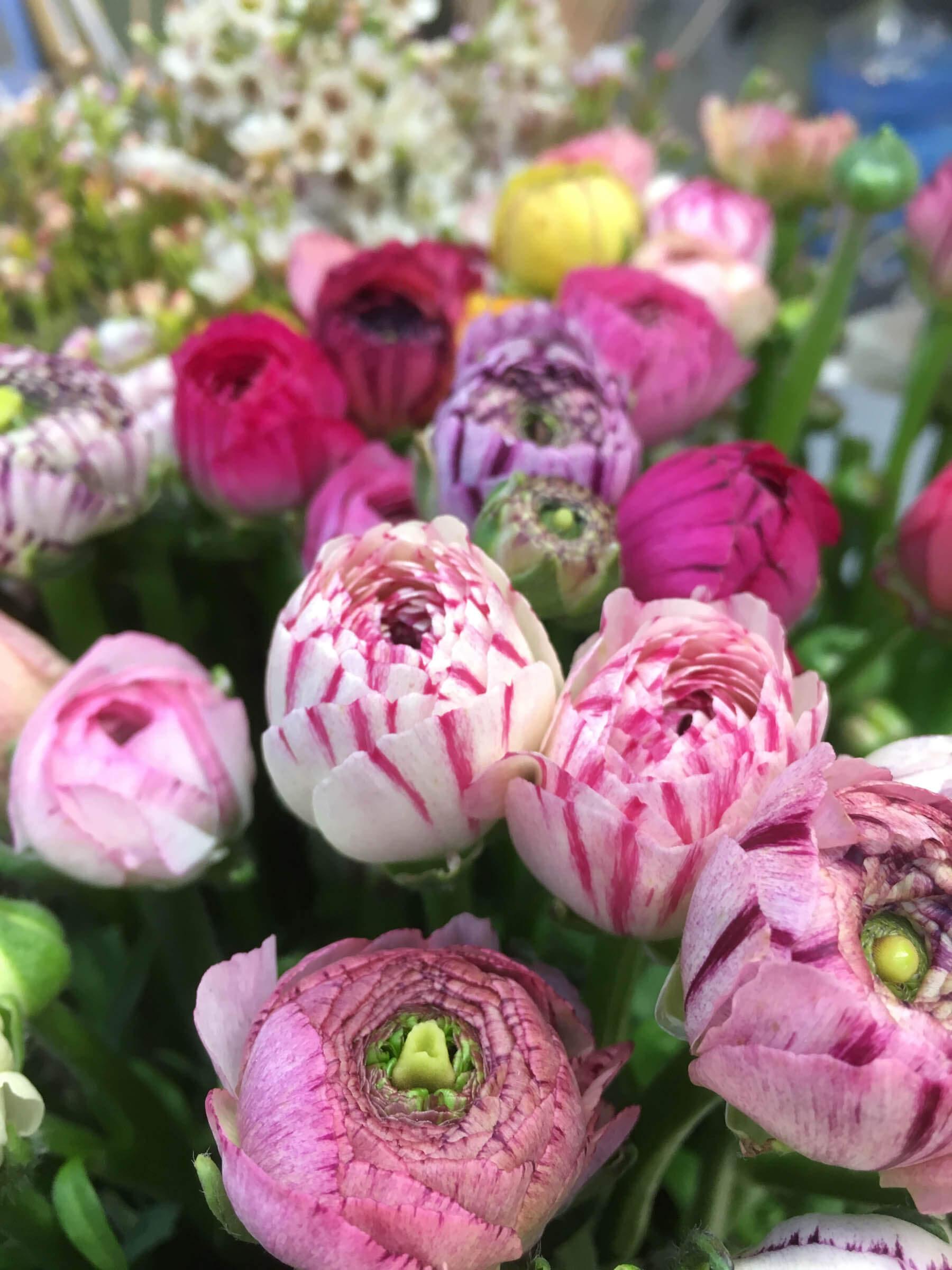 Blommande bukett med ranunklar
