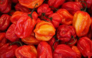 Temadag på Sollidens handelsträdgård: Chilidag med Westkust chili.