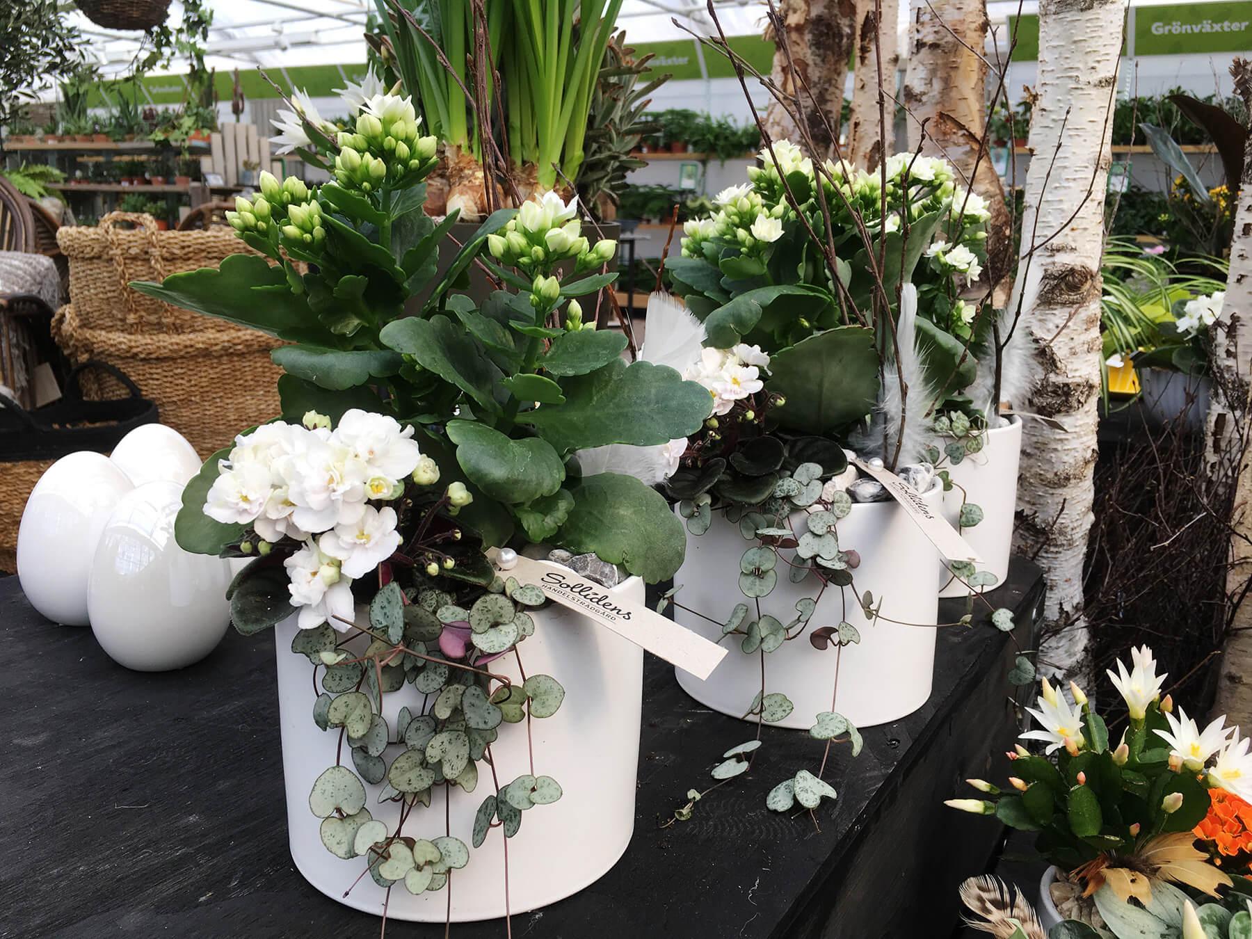 Ljusa och våriga planteringar, med en touch av påsk. Björkris, fjädrar och ägg kompletterar de vita blommorna.