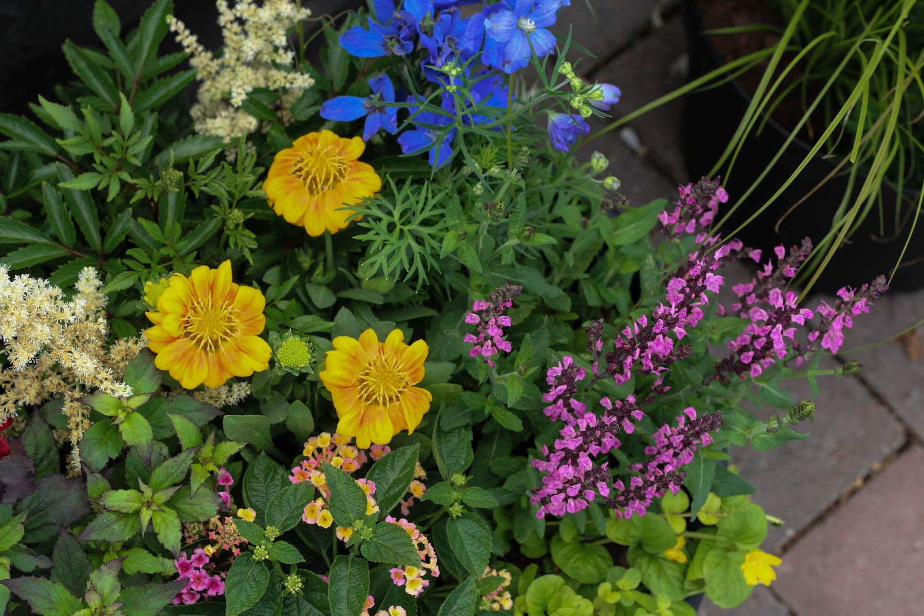 Trädgård Sommarblommor Plantering