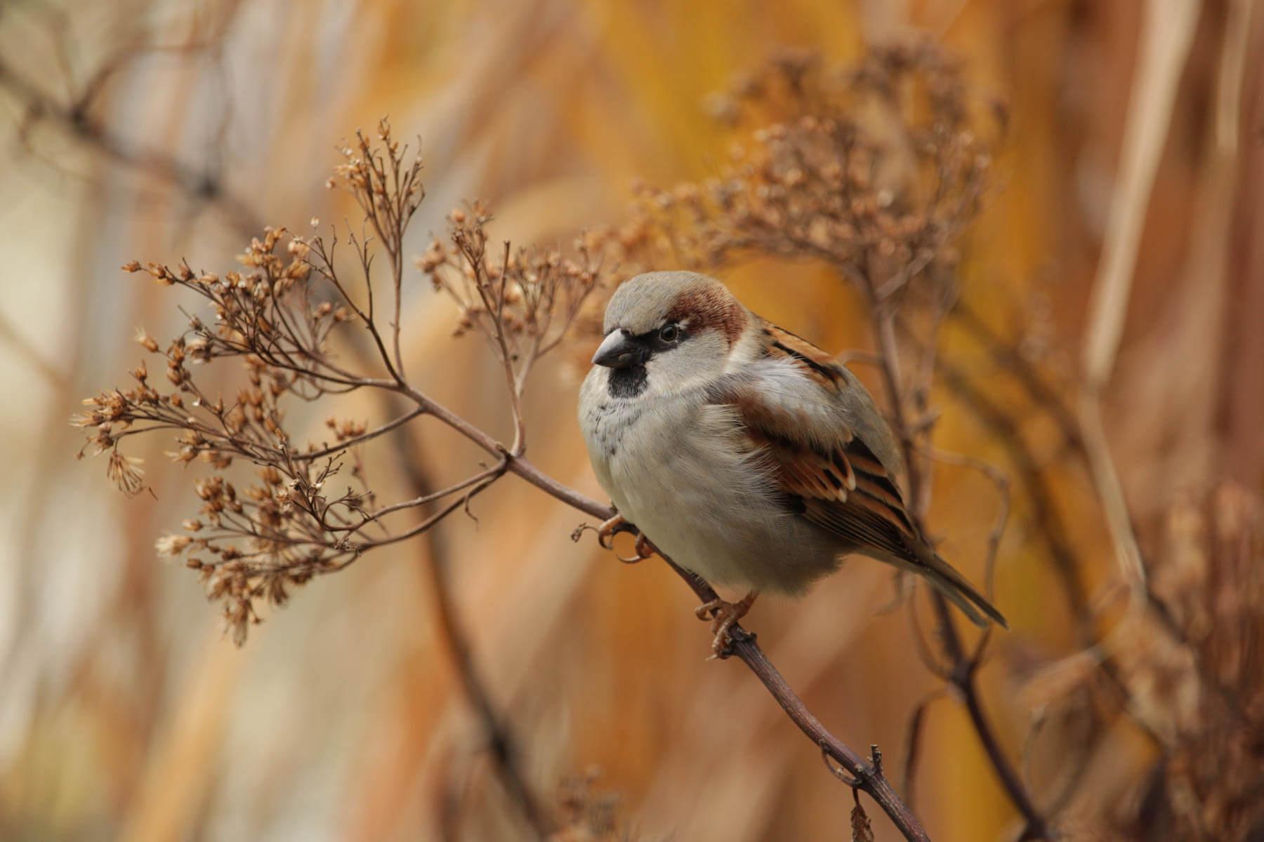 Fågel Småfågel Mata fåglarna