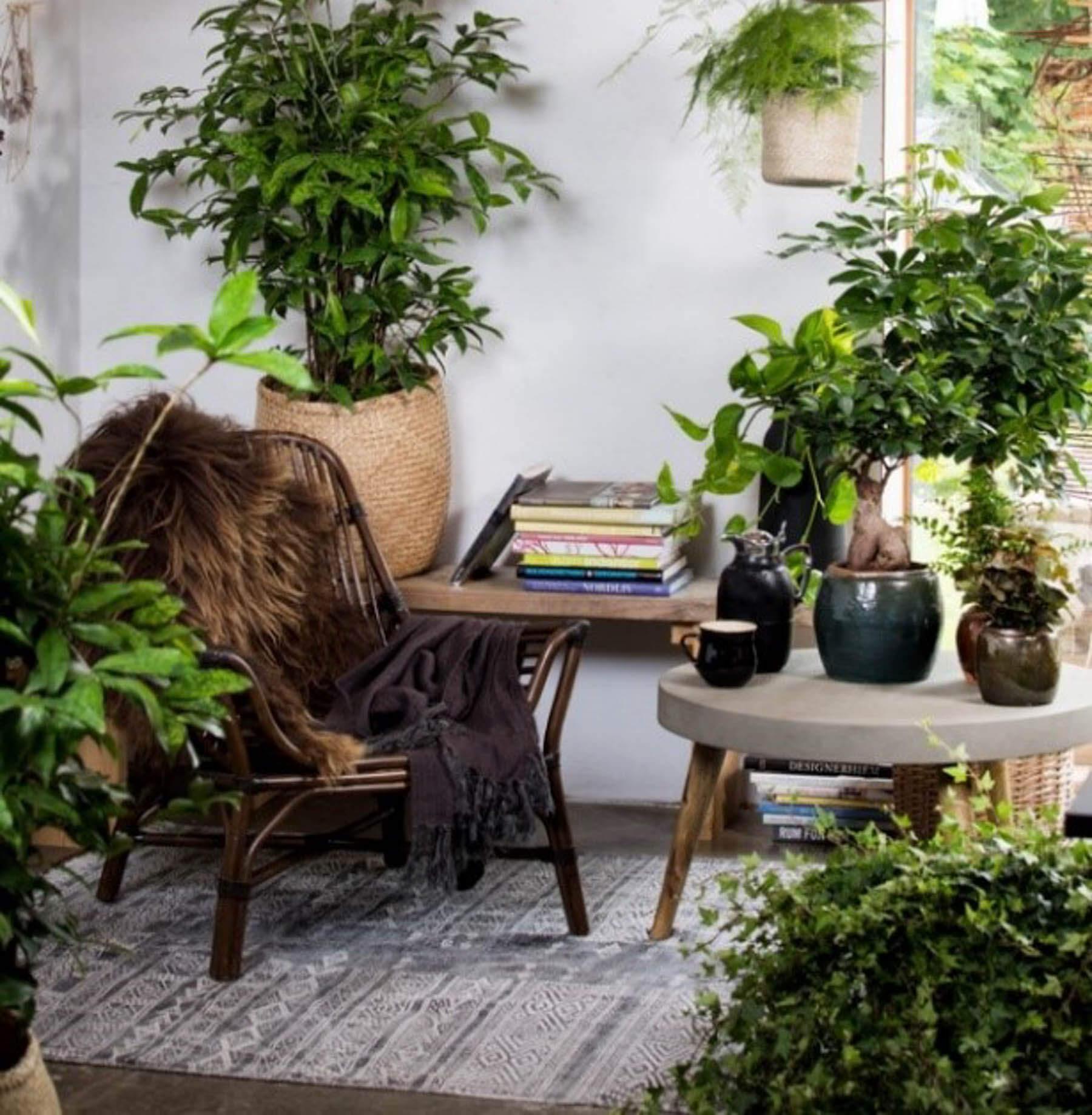 Med gröna växter får du ett trivsamt hem och bättre och renare luft.